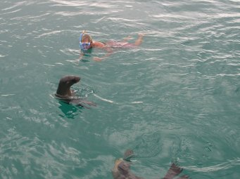 Rob swimming with a seal