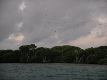 Birds above the mangroves