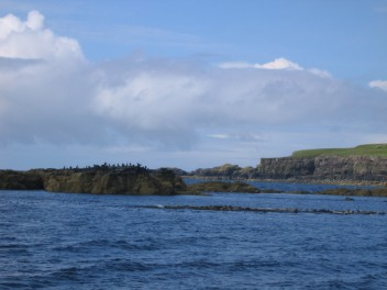 Jura's cormorant colony