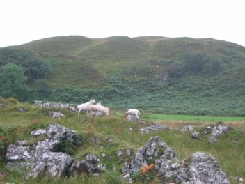 Sheep graze the hills