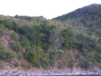 The Magnificent Frigate Bird Roost