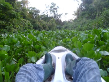 Water Hyacinth raft