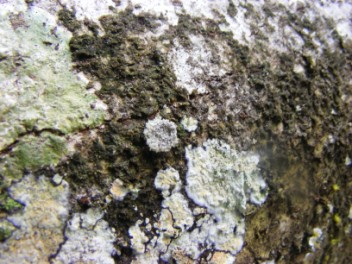 Can you find the animal??!! A lichen with legs!