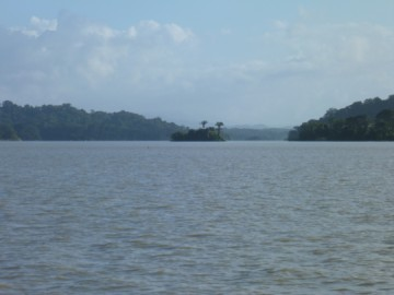 Panama Canal forest