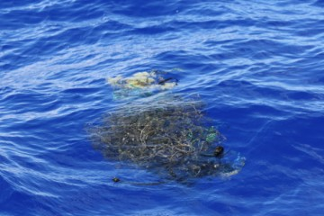 an example of rubbish in the pacific gyre